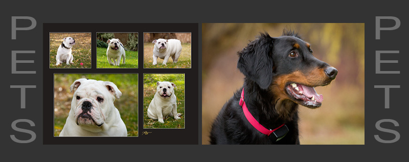 Pet photography collection